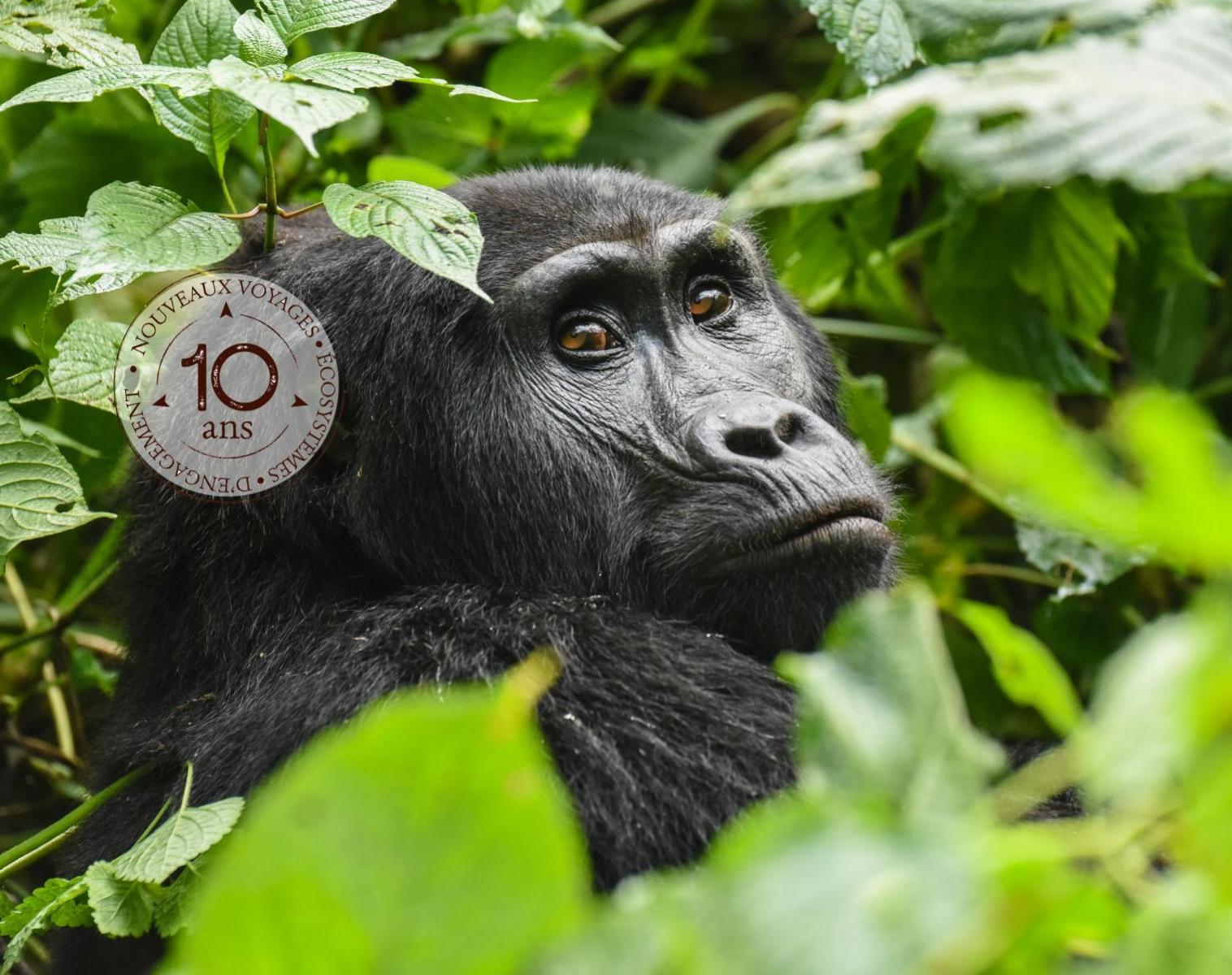 Ouganda  Spécial Gorilles des Montagnes   Trek & Randonnée Photo Observation nature Balade nature