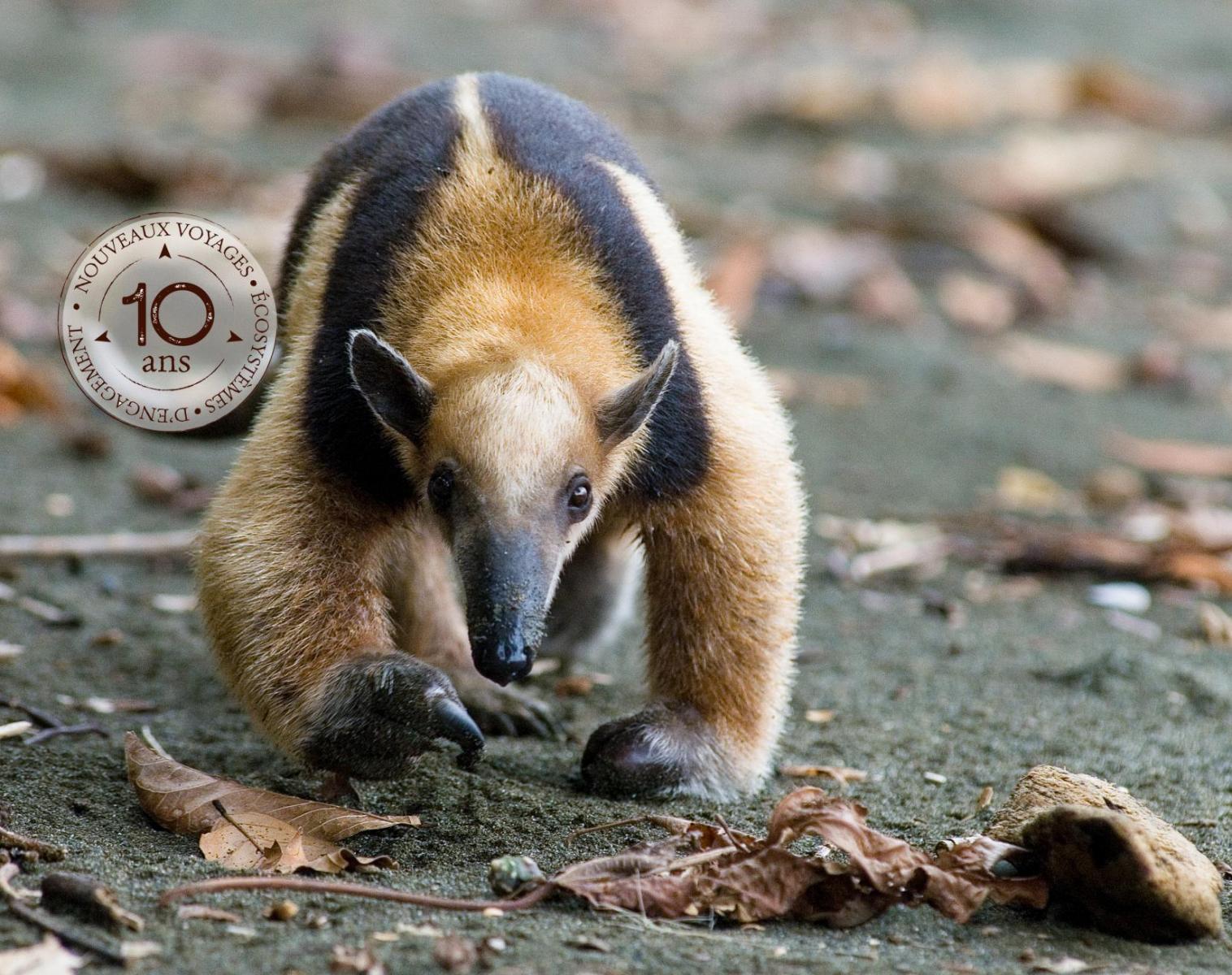 Costa Rica  Au coeur du vivant - spécial photo !   Photo Observation nature Balade nature