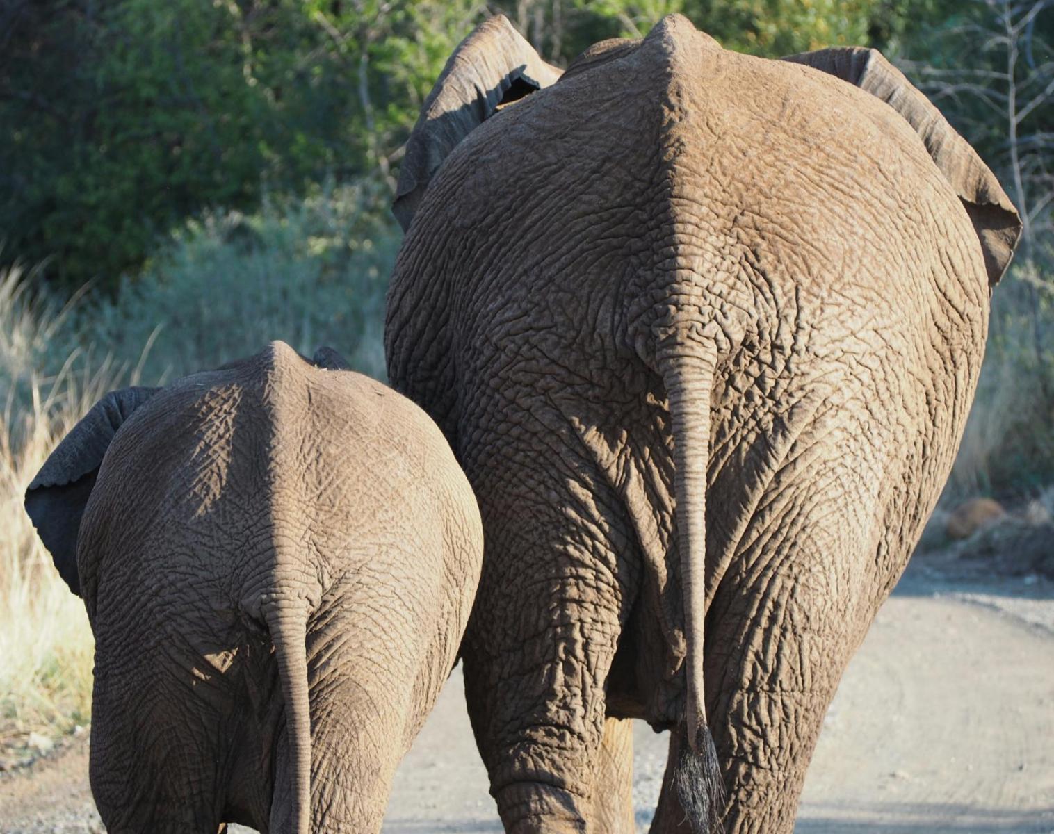 Afrique du Sud  Petits aventuriers en Afrique du Sud   Safari