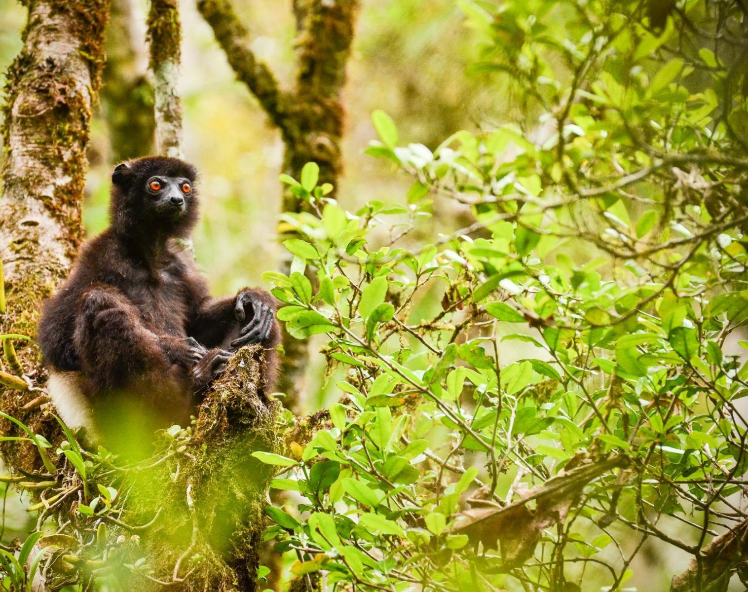 Madagascar  Merveilles malgaches   Photo Observation nature Balade nature