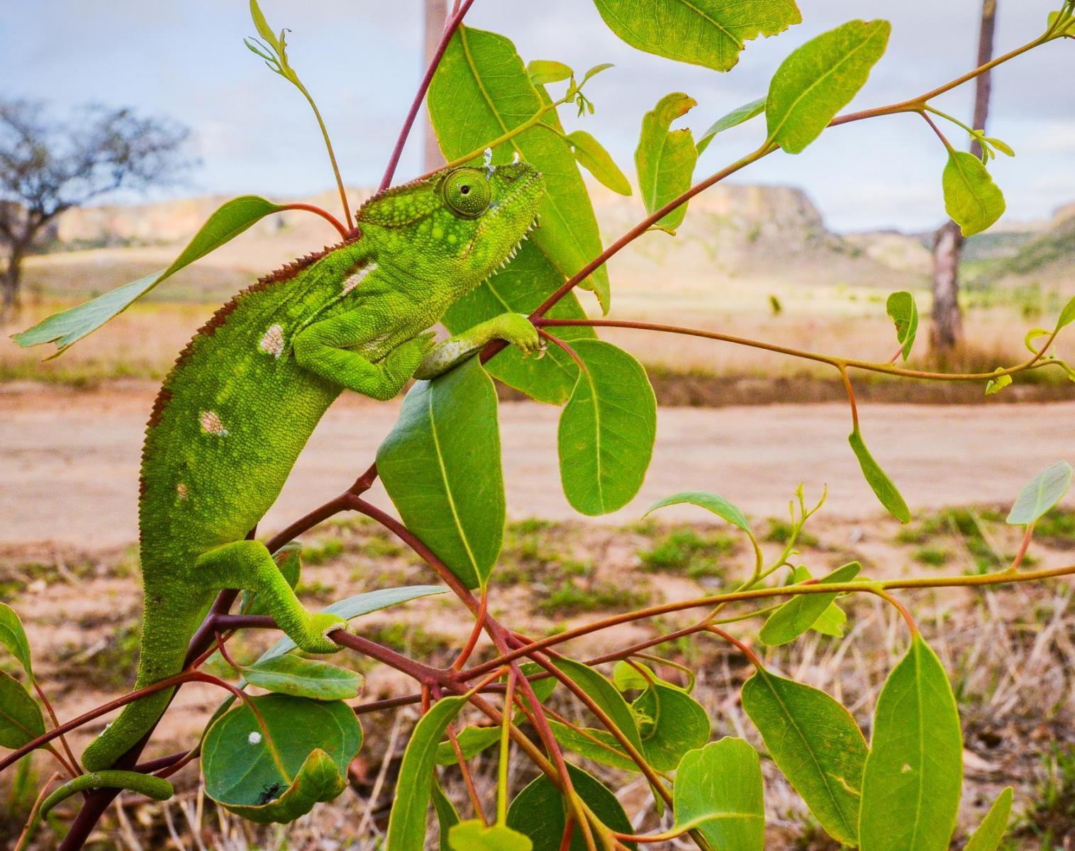 Madagascar  Nature et Photo sur la côte Nord   Photo Observation nature Balade nature
