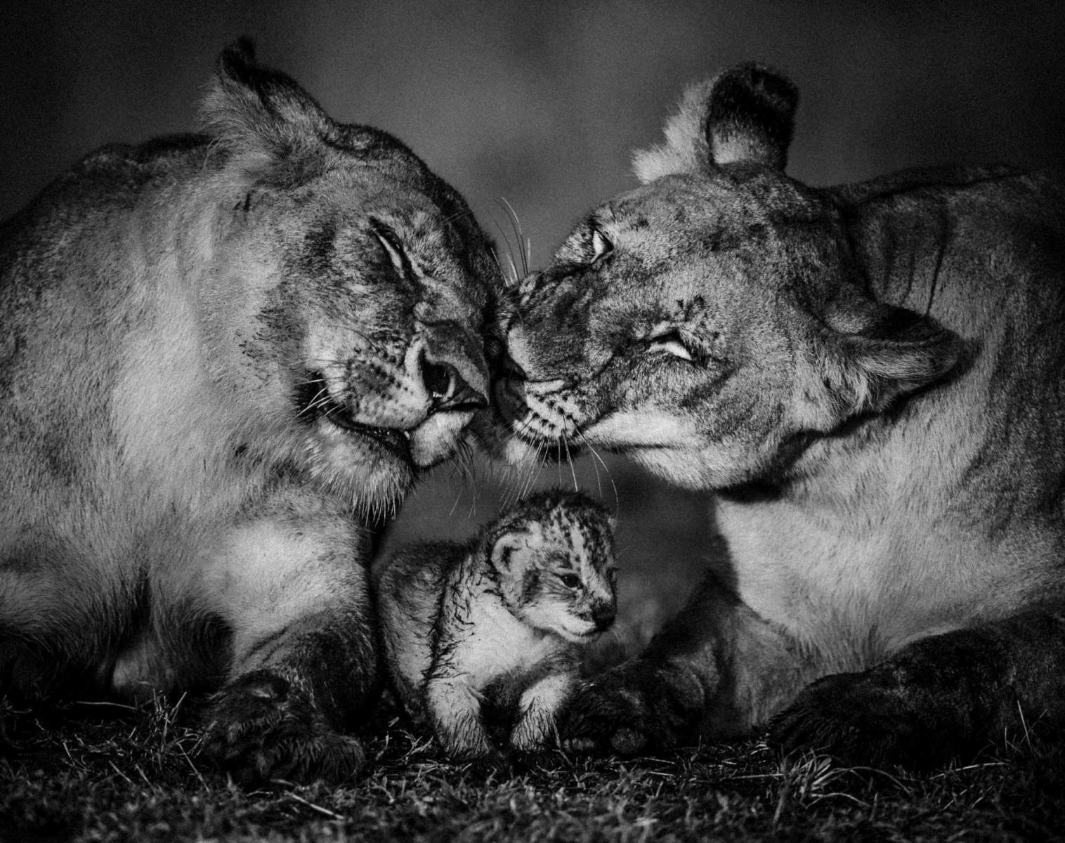 Kenya  Safaris photo avec Laurent Baheux   Photo Observation nature Safari