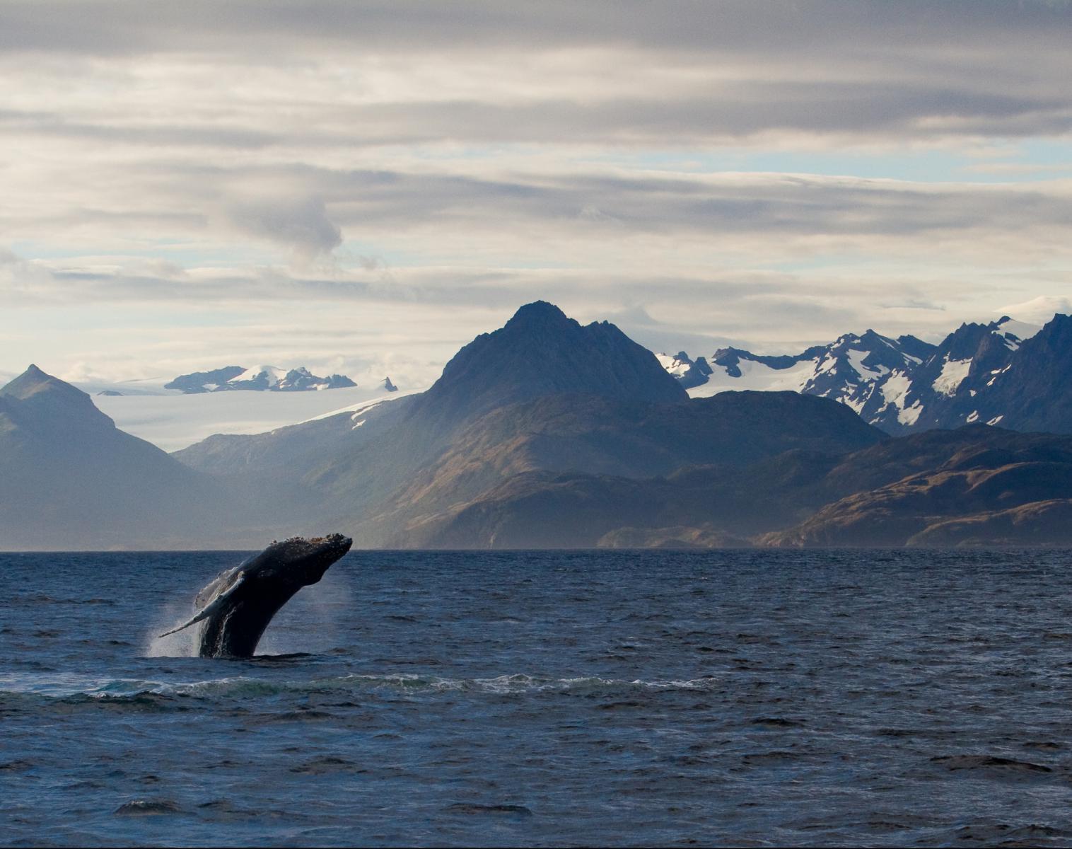 Patagonie  Mythique Patagonie, voyage naturaliste   Photo Observation nature Navigation