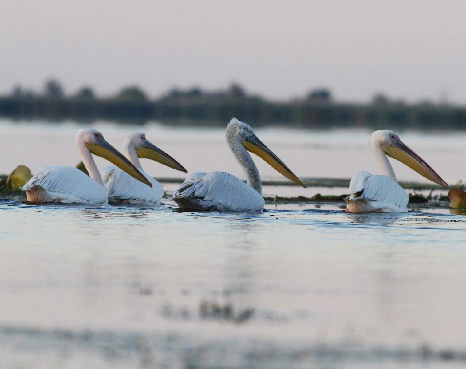 Roumanie  Entre Carpates et delta du Danube   Observation nature Balade nature