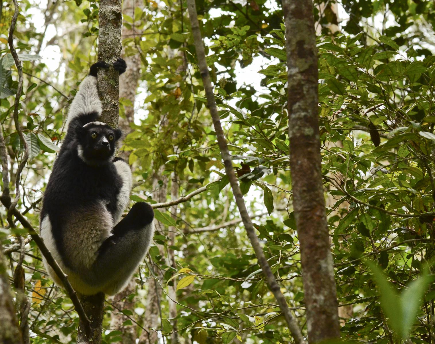 Madagascar  La traversée Nature Est-Ouest   Photo Observation nature Balade nature