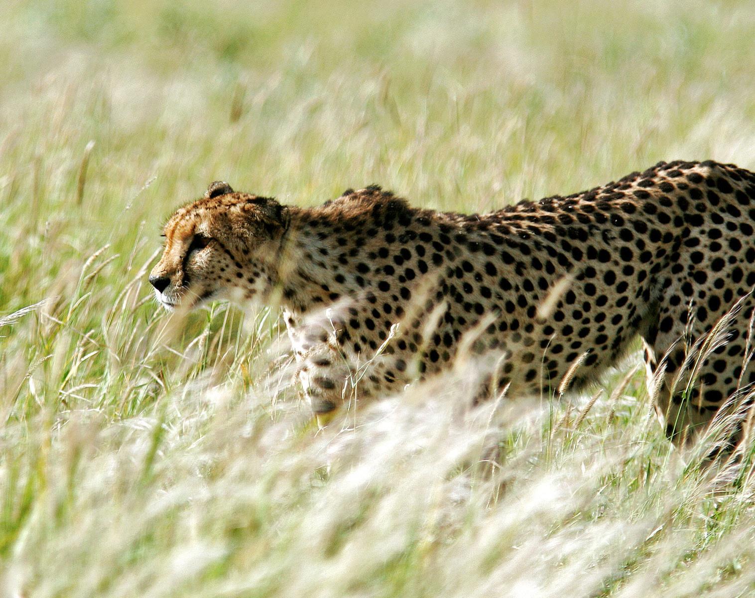 Botswana  Safari au cœur des jardins du Kalahari   Observation nature Safari