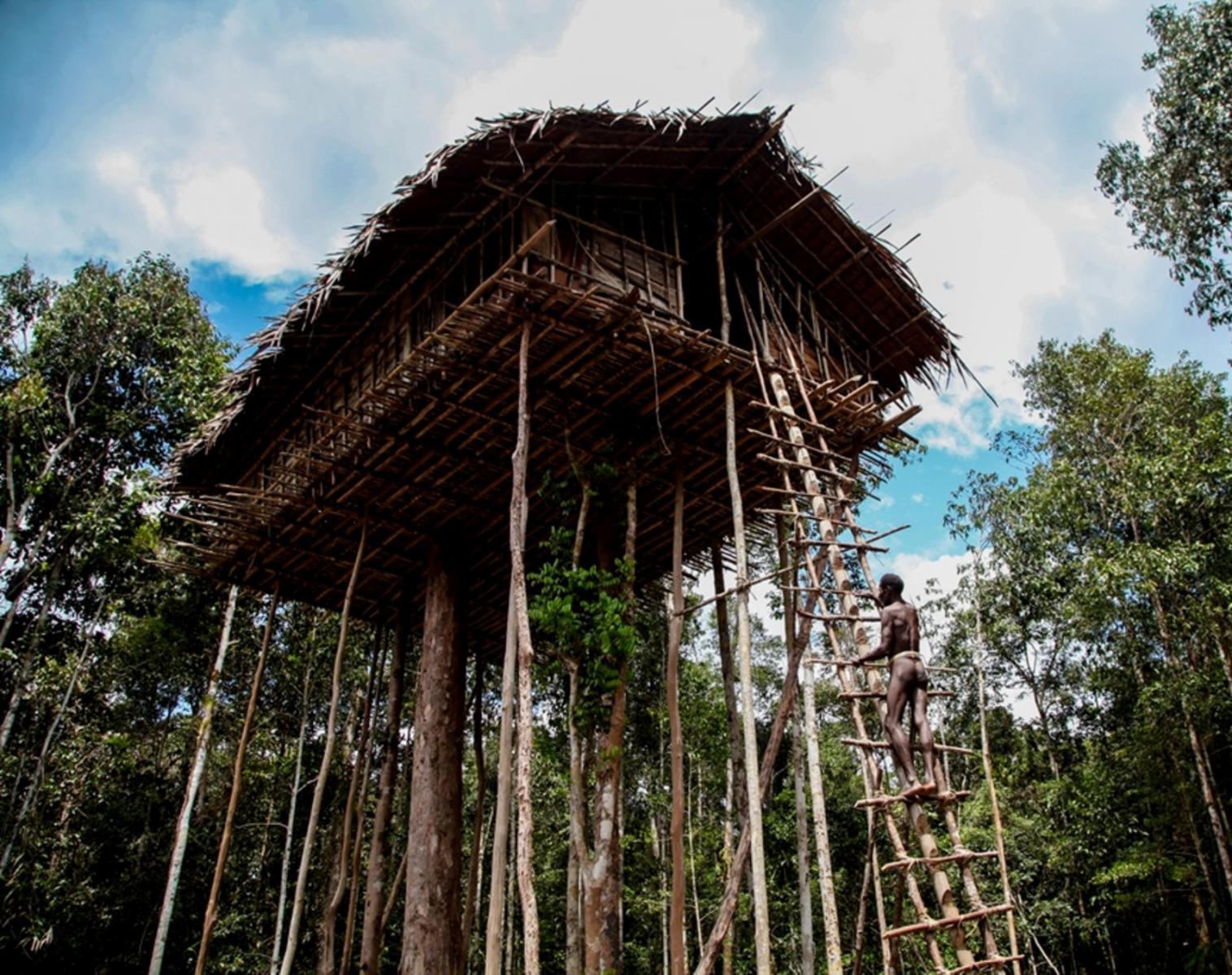 Indonésie  Papouasie , Le peuple des arbres   Trek & Randonnée Navigation