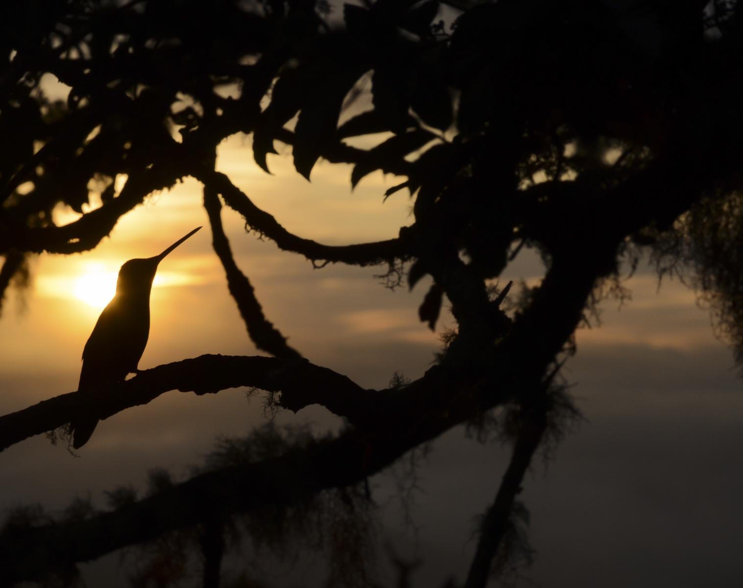 Équateur  Colibris et faune andine. Spécial photo.    Photo Observation nature Balade nature