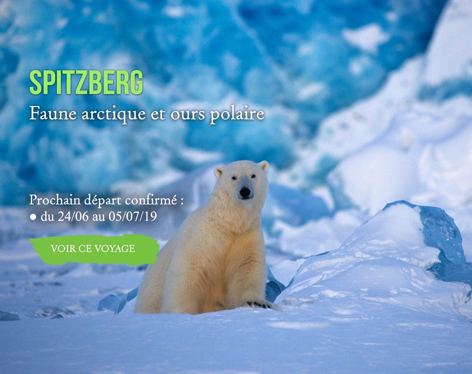 Spitzberg, Faune arctique et Ours polaire