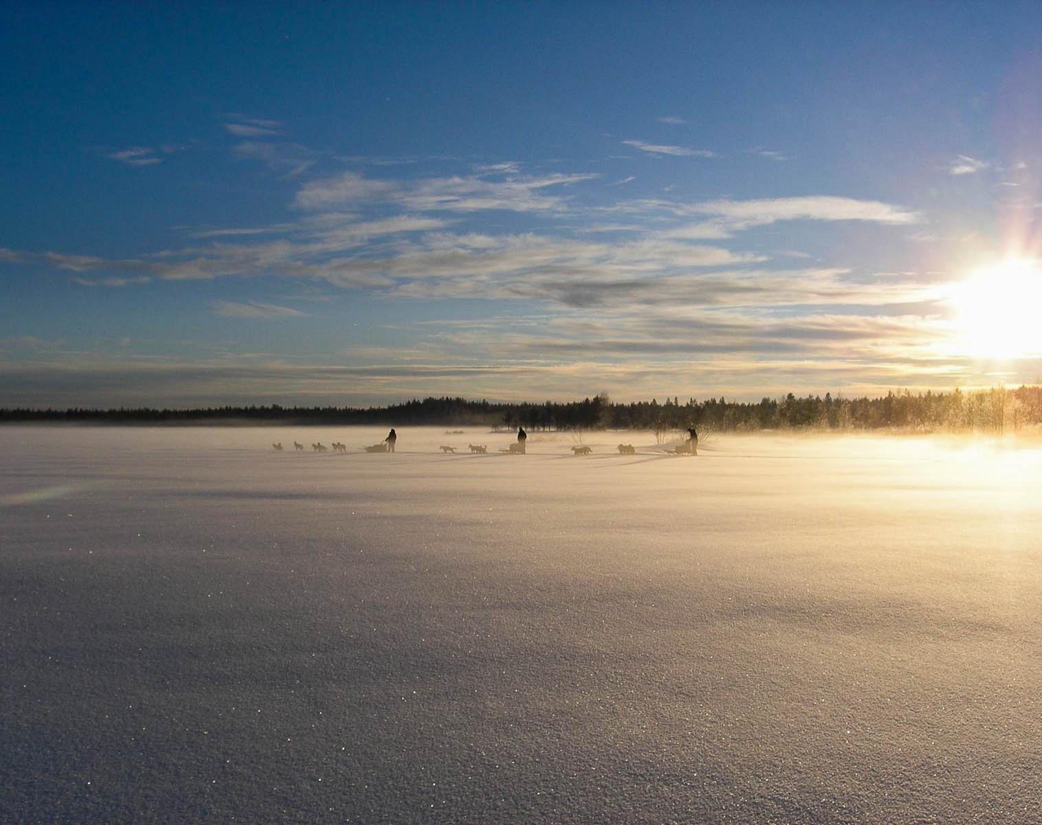 Finlande  Echappée nordique en traineaux sur la frontière Russe   Chiens de traîneaux Raquettes