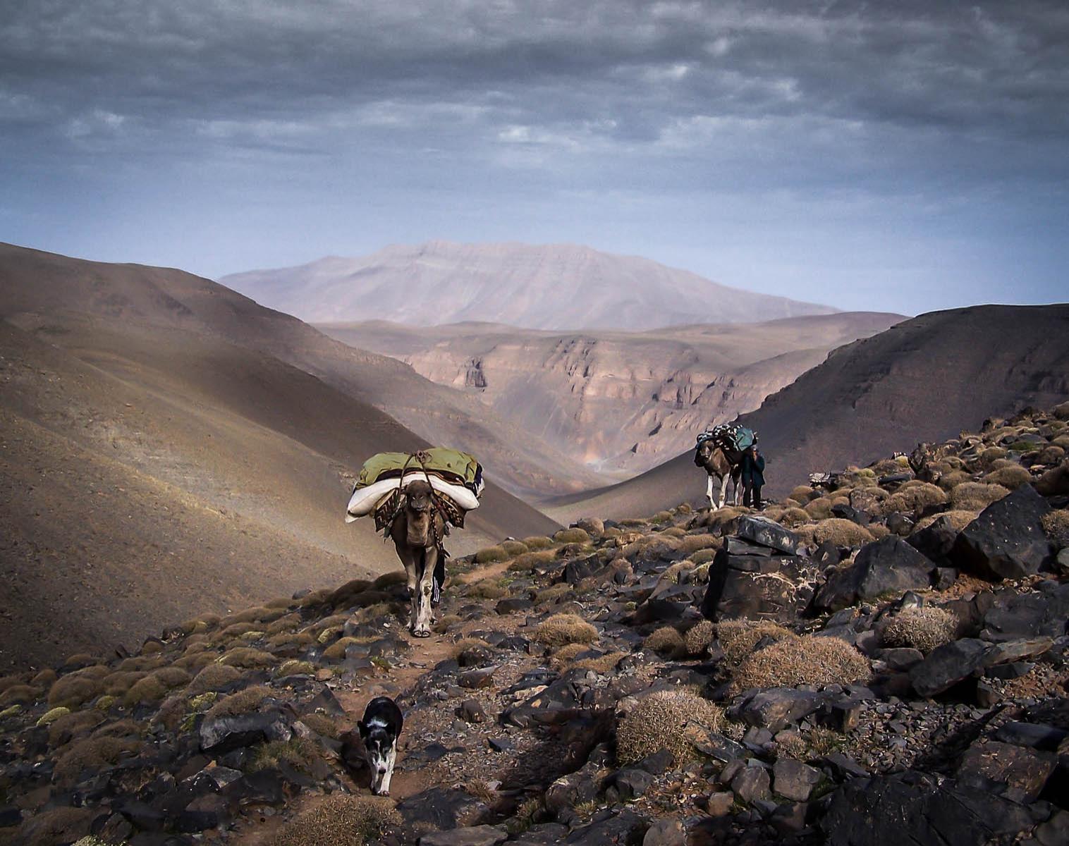 Maroc  Transhumance sur les hautes terres nomades   Trek & Randonnée