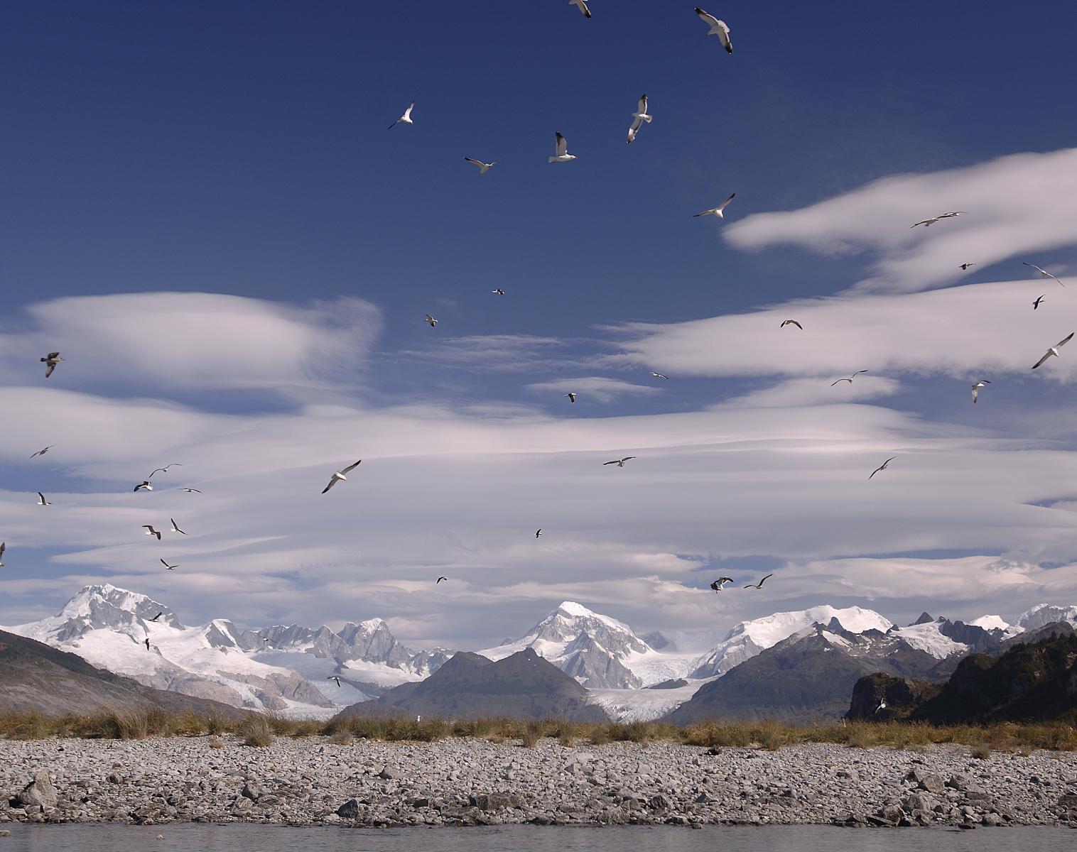 Patagonie  L'Odyssée Andine Etape 9 : Exploration de la Cordillera Darwin   Découverte Photo Observation nature