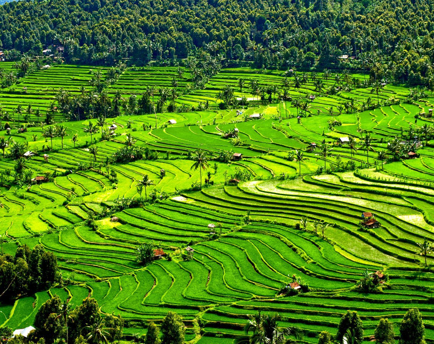 Indonésie  Bali - Lombok, randonnée bucolique   Découverte Apnée & Plongée  Rencontres et cultures du Monde