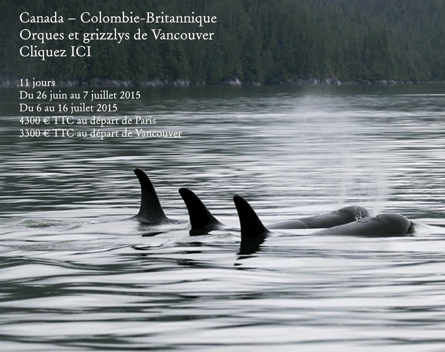 Canada – Colombie-Britannique Orques et grizzlys de Vancouver