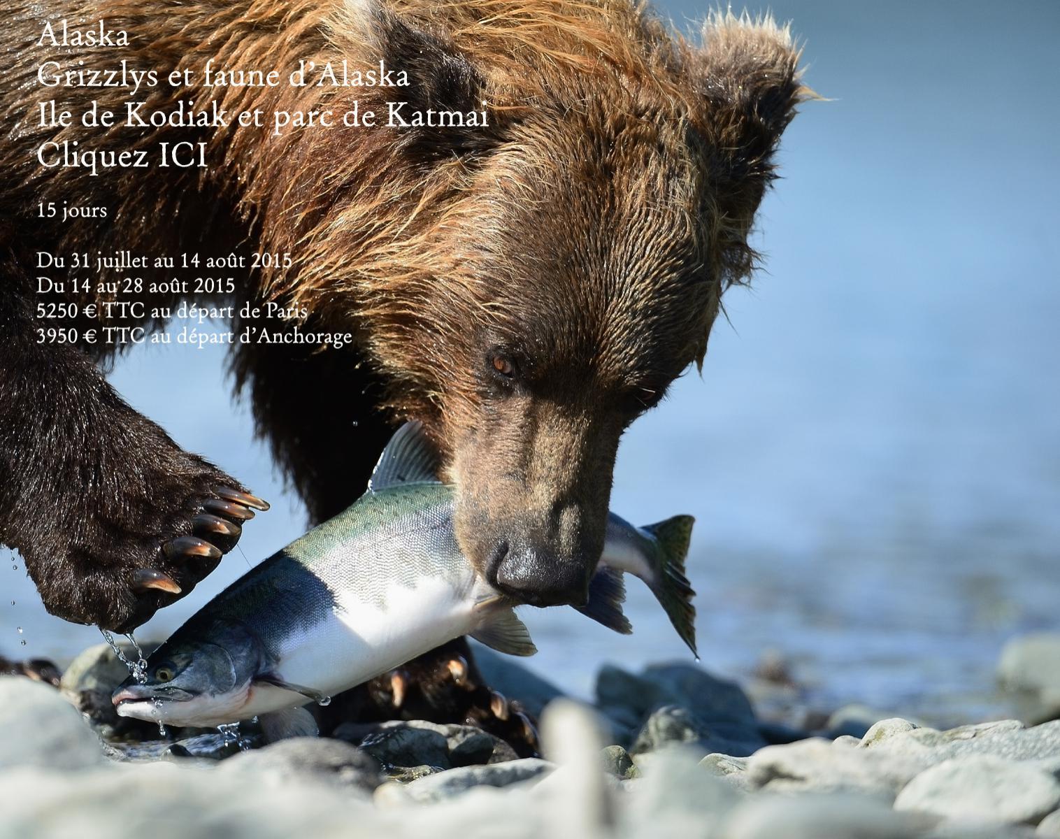 Alaska Grizzlys et faune d'Alaska