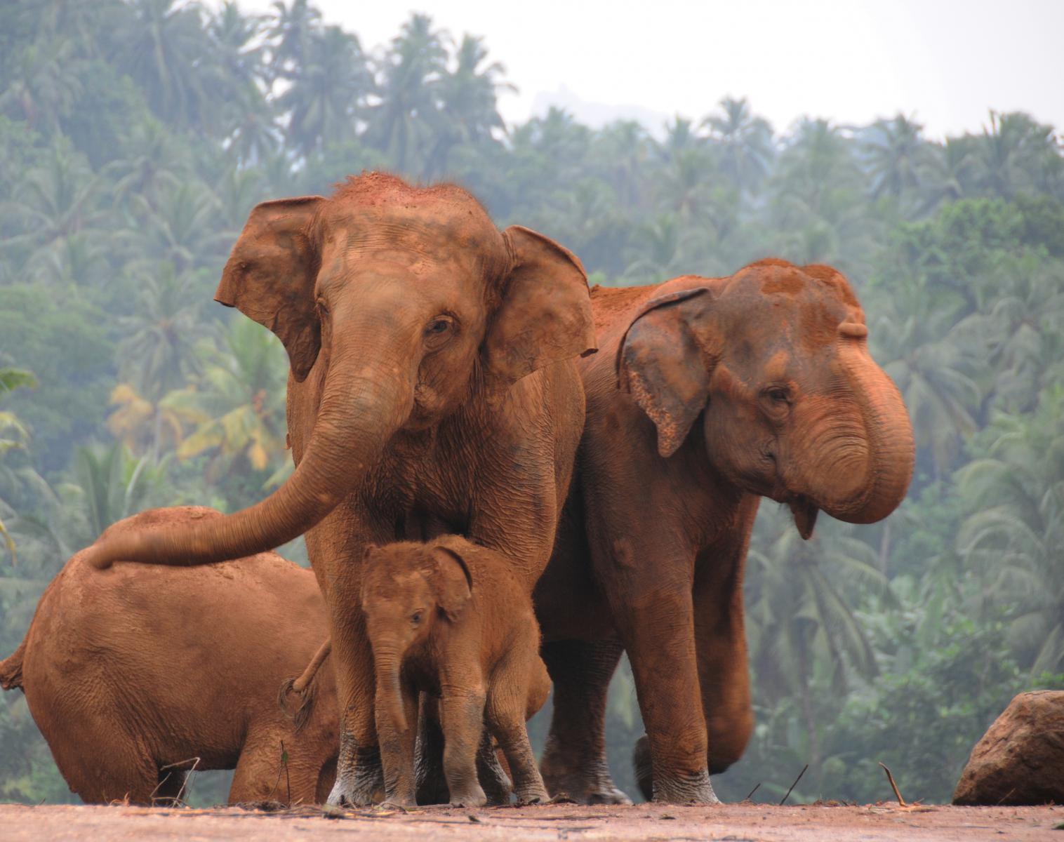 Sri Lanka  Sri Lanka, la grande boucle !   Observation nature Safari Balade nature Rencontres et cultures du Monde