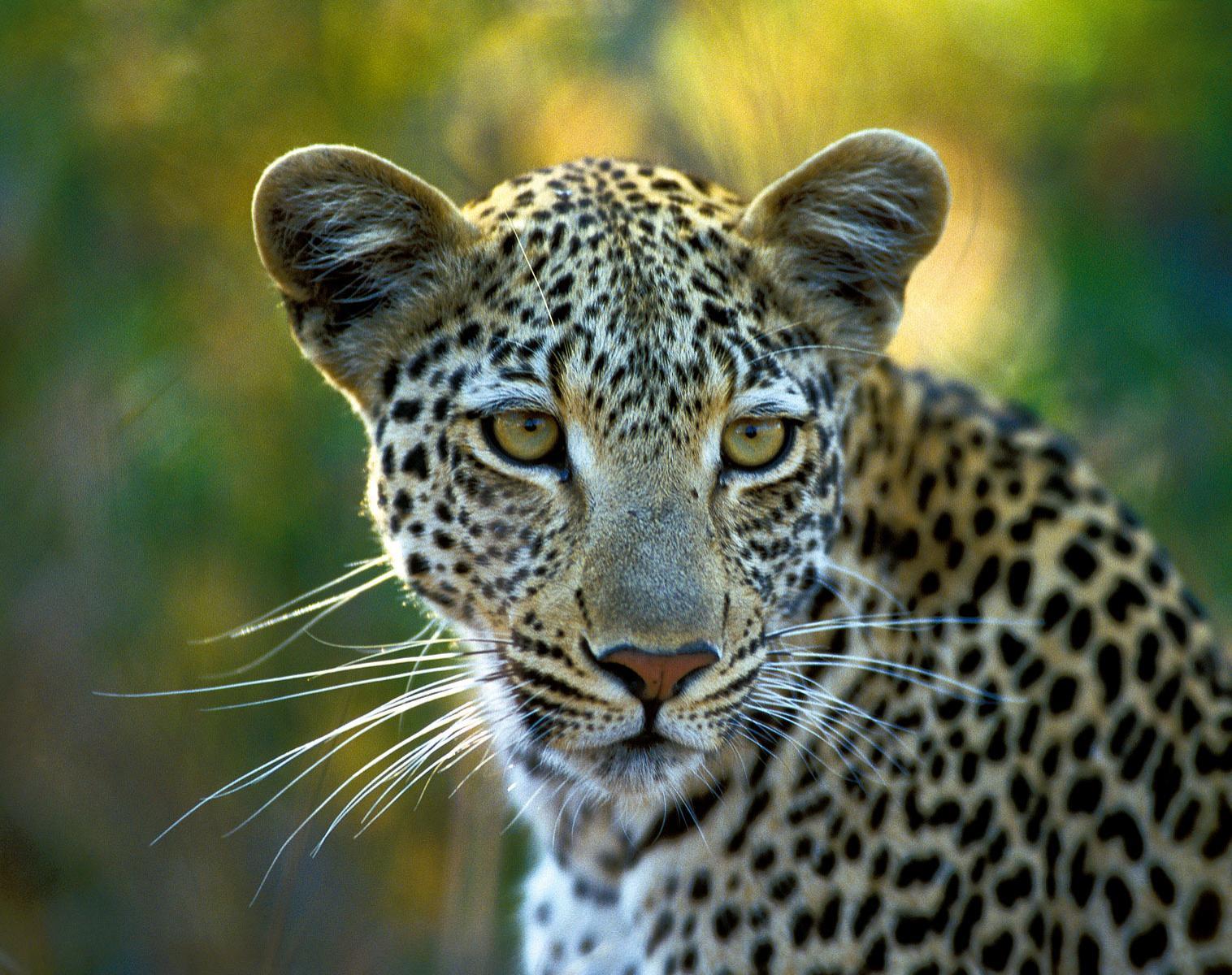 Tanzanie  Safaris, camps de toile au cœur des parcs   Photo Observation nature Safari