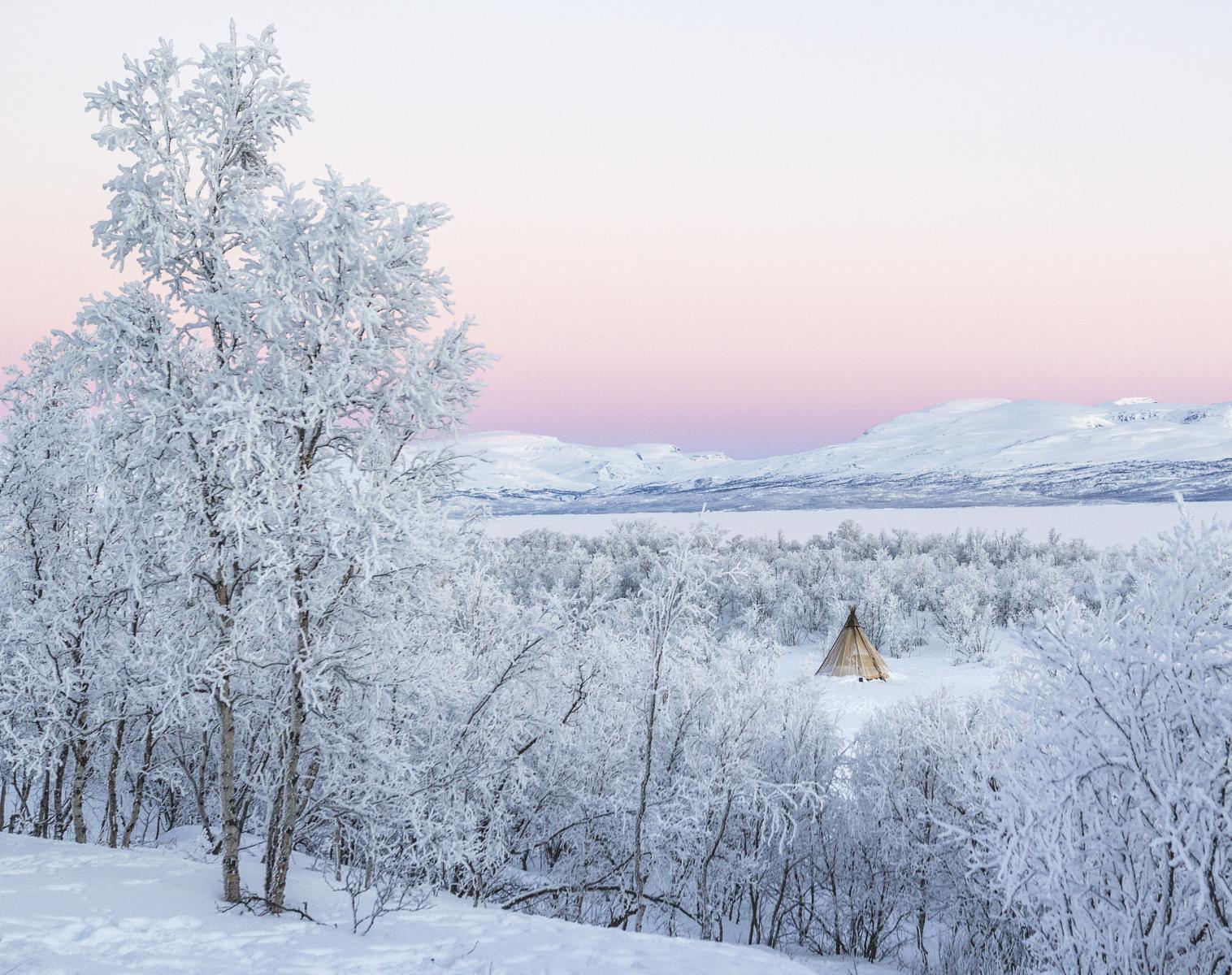 Suède  Magie de l'hiver en Laponie   Photo Observation nature Chiens de traîneaux Raquettes