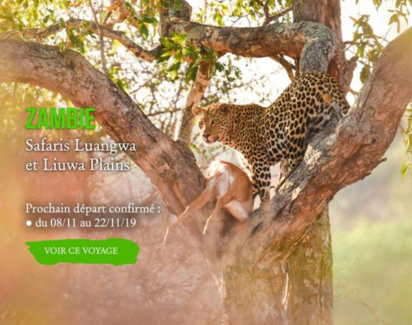 ZAMBIE, Safari Luangwa