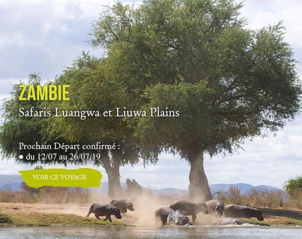 ZAMBIE, Safaris Luangwa