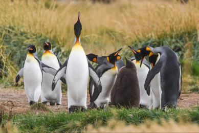 voyage patagonie observation faune nature navigation magellan paine