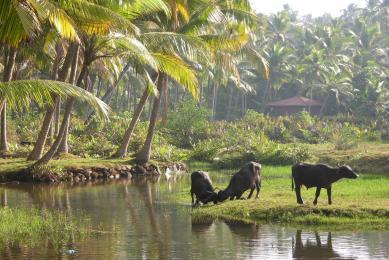 Inde du Sud voyage découverte culture tamoule bouddhisme