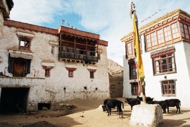 Trekking Himalaya Ladakh rivière Tchadar balades raquettes