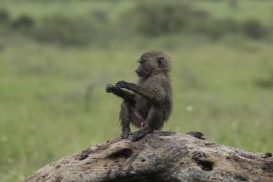 safari kenya rencontre Maasai