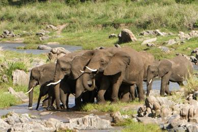 voyage famille au kenya