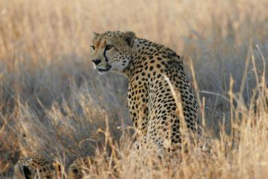 trek safari samburu maasai