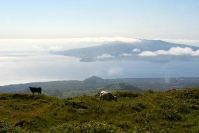 Voyage nature Açores Portugal île de Pico observation animalière