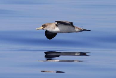 Açores voyage  nature observation oiseaux