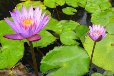 Inde du Sud découverte forêts tropicales rencontres