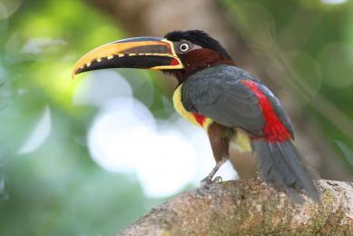 Brésil Pantanal voyage découverte animaux photographie