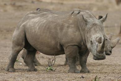 safari marche rencontre au kenya maasai mara