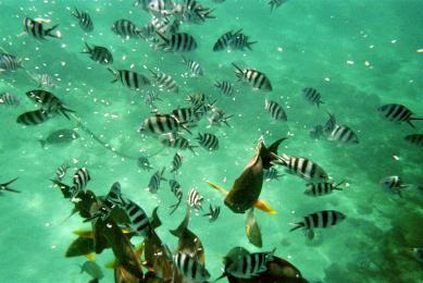 Voyage pirogue Madagascar Nosy Be