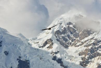 condor observation Pérou voyage trek Andes Machu Picchu trekkig randonnée Choqueqirao