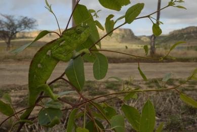 voyage biodiversité madagascar