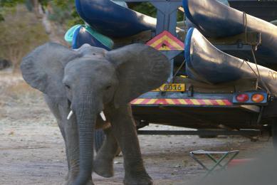 canoë zimbabwe safari