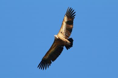 voyage observation ornithologique Andalousie flore faune Espagne