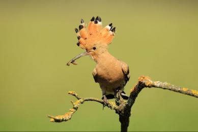 Voyage naturaliste Hongrie photographes amateurs ornithologie