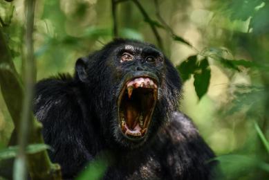 Voyage Nature Ouganda Rwanda