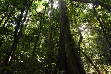 voyage observation grands singes ouganda
