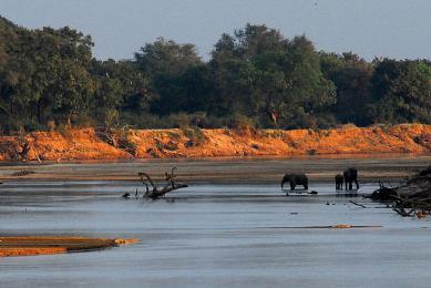 voyage exploration afrique photographie faune flore