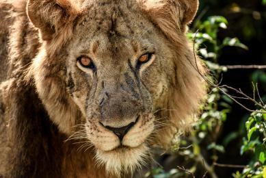 voyage aventure lac malawi Afrique safari