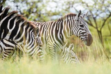 safari original afrique