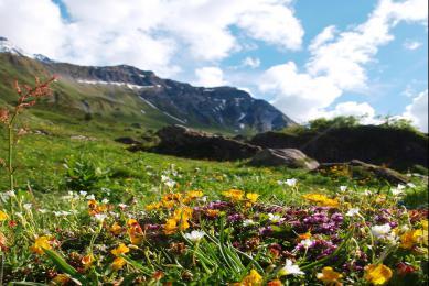 Faune alpine