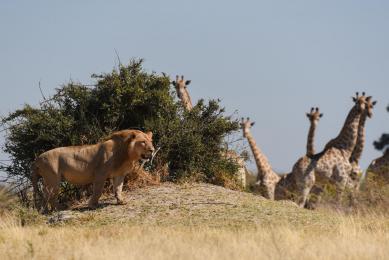 safari south luangwa