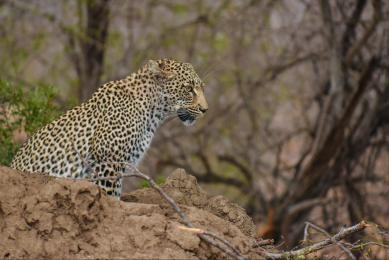 safari victoria falls