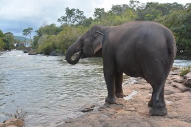 Trek Laos navigation fleuve Mékong rencontres